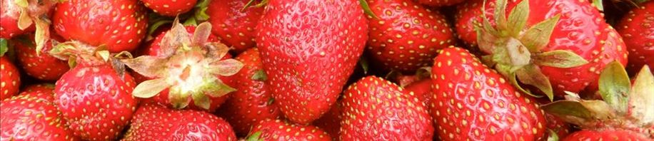 Strawberries included in your veggie share!