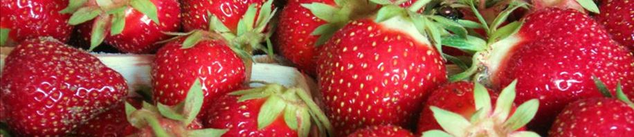 Yummy Strawberries fresh from the field!